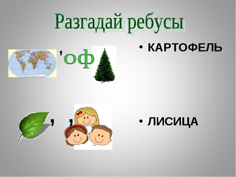 КАРТОФЕЛЬ ЛИСИЦА ,