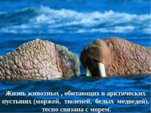 Жизнь животных , обитающих в арктических пустынях (моржей, тюленей, белых мед