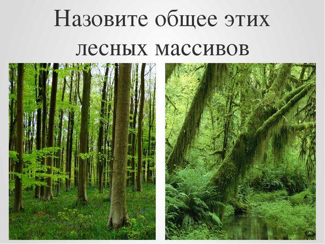 Назовите общее этих лесных массивов