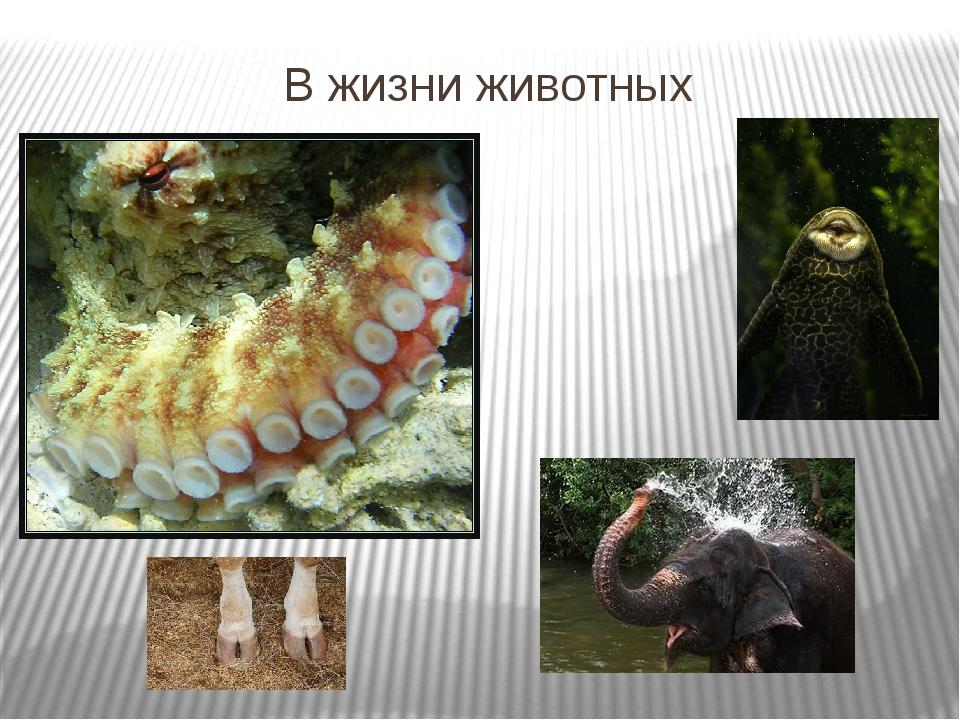 В жизни животных
