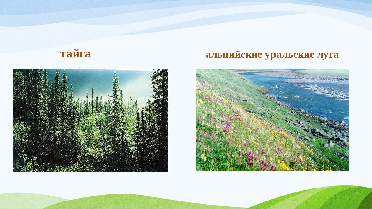тайга альпийские уральские луга