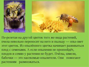 Перелетая на другой цветок того же вида растений, пчела невольно переносит н