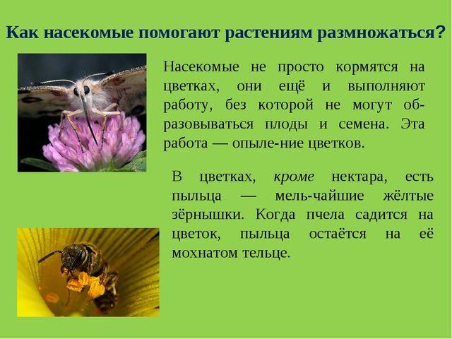 Насекомые не просто кормятся на цветках, они ещё и выполняют работу, без кото...