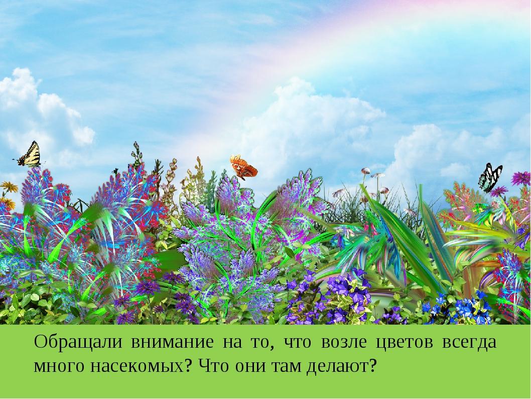 Обращали внимание на то, что возле цветов всегда много насекомых? Что они там...