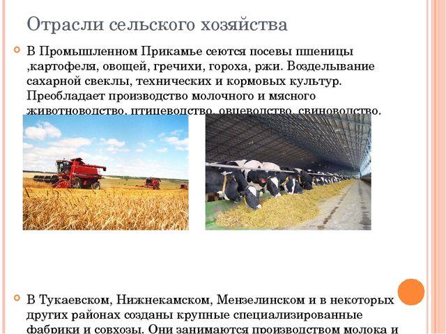 Отрасли сельского хозяйства В Промышленном Прикамье сеются посевы пшеницы ,ка...