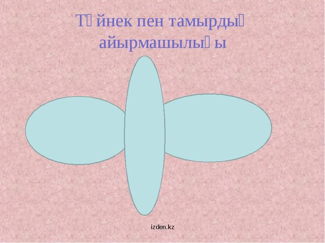 Түйнек пен тамырдың айырмашылығы izden.kz izden.kz