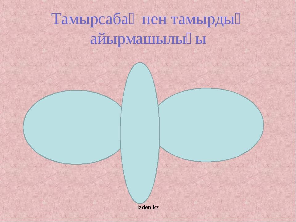 Тамырсабақ пен тамырдың айырмашылығы izden.kz izden.kz