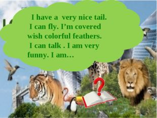 I have a very nice tail. I can fly. I'm covered wish colorful feathers. I ca