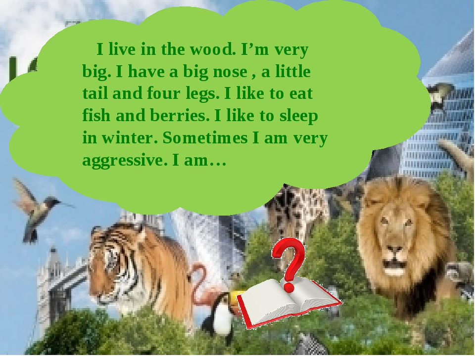 I live in the wood. I'm very big. I have a big nose , a little tail and four...