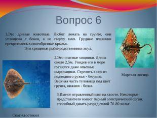 Вопрос 6 Скат-хвостокол Морская лисица 1.Это донные животные. Любят лежать на