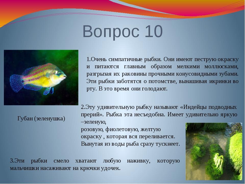 Вопрос 10 Губан (зеленушка) 1.Очень симпатичные рыбки. Они имеют пеструю окра...