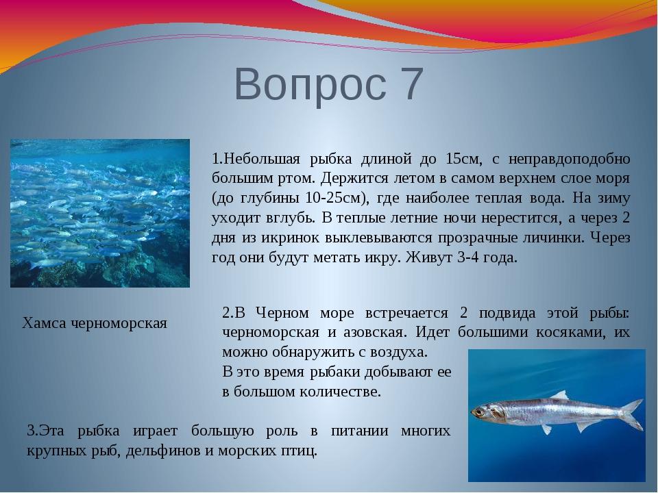 Вопрос 7 Хамса черноморская 1.Небольшая рыбка длиной до 15см, с неправдоподоб...