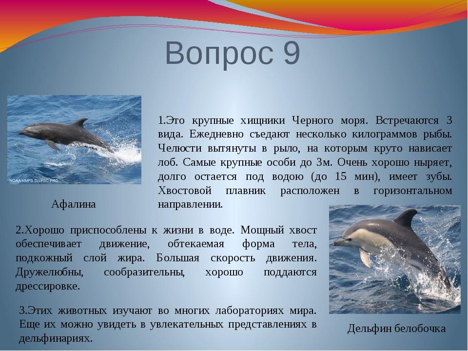 Вопрос 9 Дельфин белобочка Афалина 1.Это крупные хищники Черного моря. Встреч...