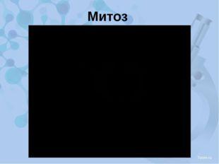 Митоз