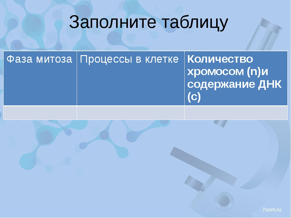 Заполните таблицу Фаза митоза Процессыв клетке Количество хромосом (n)и содер...