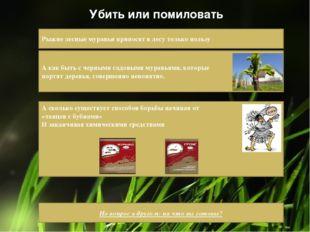 Убить или помиловать Рыжие лесные муравьи приносят в лесу только пользу А как