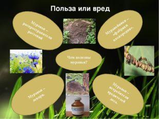 Чем полезны муравьи? Муравьи – лекари. Муравьи – истребители вредителей леса.