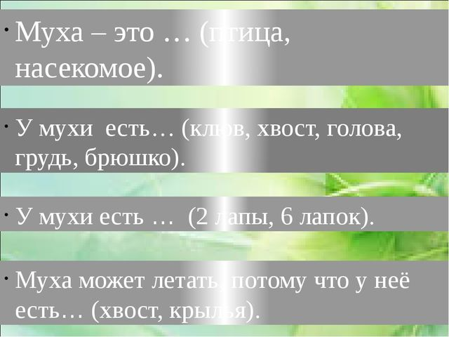 Муха – это … (птица, насекомое). У мухи есть… (клюв, хвост, голова, грудь, бр...
