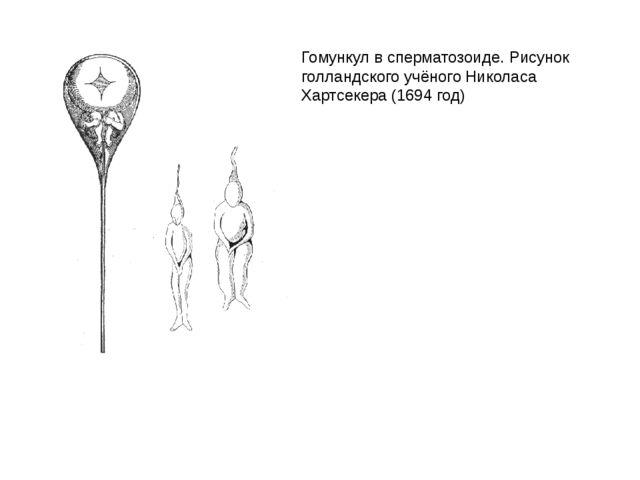 Гомункул в сперматозоиде. Рисунок голландского учёногоНиколаса Хартсекера(1...