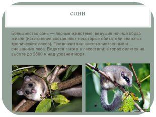 сони Большинство сонь — лесные животные, ведущие ночной образ жизни (исключен