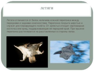 летяги Летяги отличаются от белок наличием кожной перепонки между передними и