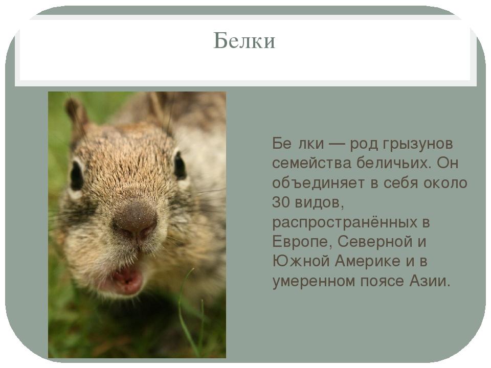 Белки Бе́лки — род грызунов семейства беличьих. Он объединяет в себя около 30...