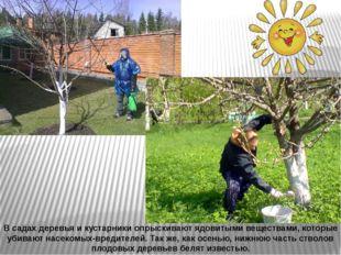 В садах деревья и кустарники опрыскивают ядовитыми веществами, которые убиваю