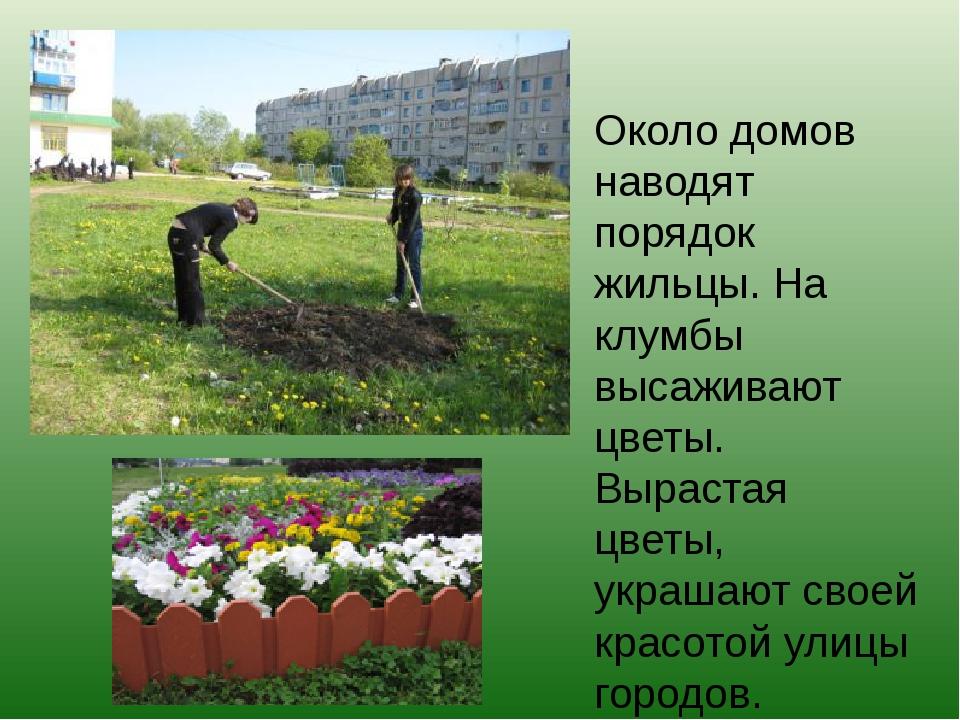 Около домов наводят порядок жильцы. На клумбы высаживают цветы. Вырастая цвет...