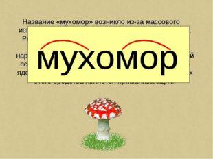 Название «мухомор» возникло из-за массового использования данного гриба в быт