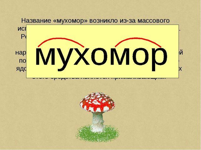 Название «мухомор» возникло из-за массового использования данного гриба в быт...