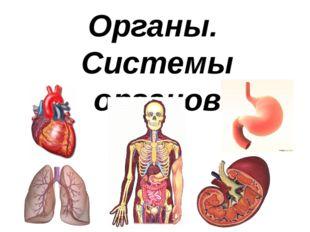Органы. Системы органов