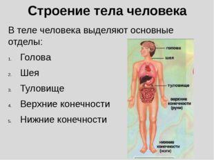 Строение тела человека В теле человека выделяют основные отделы: Голова Шея Т