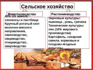 Сельское хозяйство Животноводство Растениеводство Зерновые культуры: пшеница