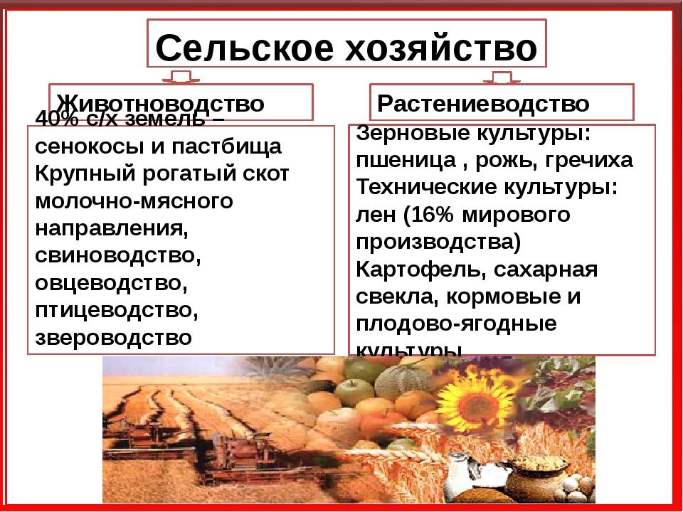 Сельское хозяйство Животноводство Растениеводство Зерновые культуры: пшеница...
