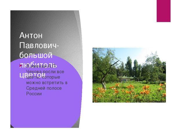 Антон Павлович- большой любитель цветов В имении А.П. Чехова росли все цветы,...