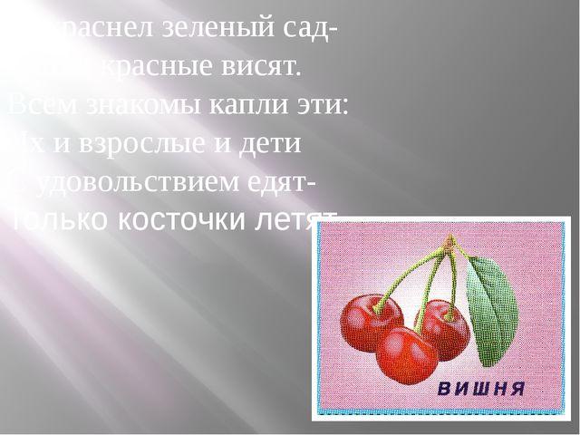 Покраснел зеленый сад- Капли красные висят. Всем знакомы капли эти: Их и взро...