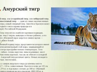 Амурский тигр Аму́рский тигр, илиуссурийский тигр, илисибирский тигр, илид
