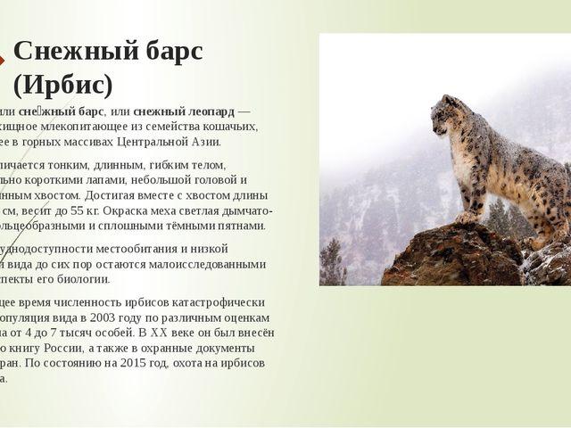 Снежный барс (Ирбис) И́рбис, илисне́жный барс, илиснежный леопард— крупное...