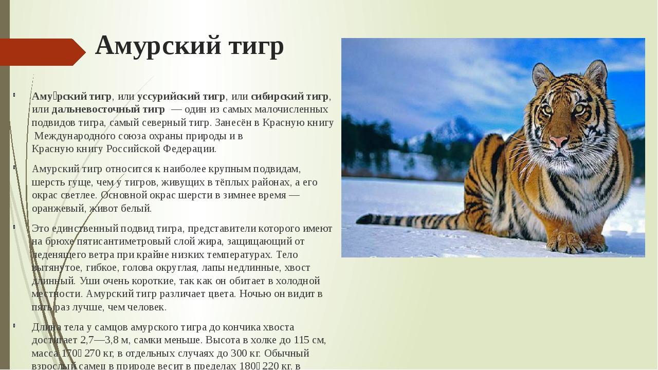 Амурский тигр Аму́рский тигр, илиуссурийский тигр, илисибирский тигр, илид...