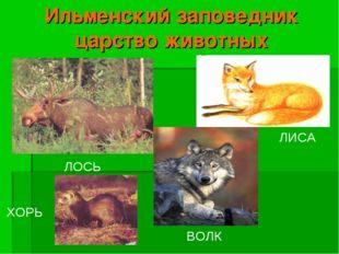 Ильменский заповедник царство животных ЛОСЬ ХОРЬ ВОЛК ЛИСА