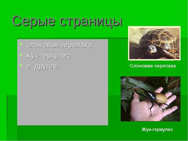 Серые страницы слоновая черепаха, жук-геркулес и другие. Слоновая черепаха Жу...