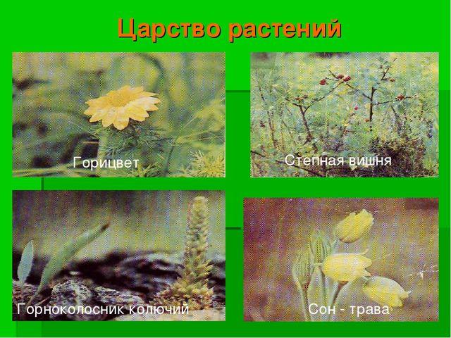Царство растений Степная вишня Горицвет Горноколосник колючий Сон - трава