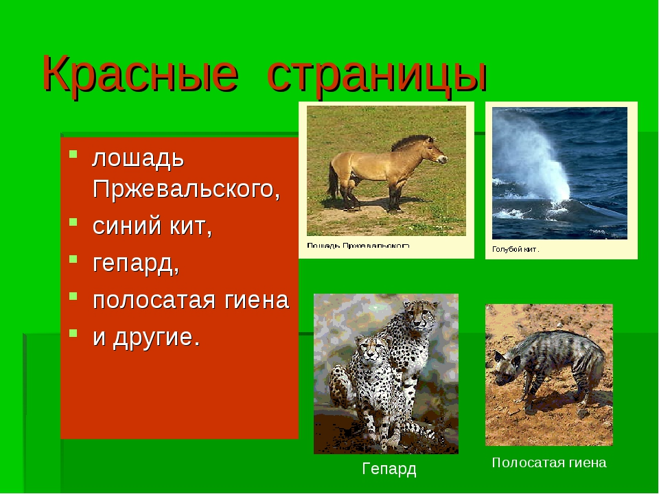 Красные страницы лошадь Пржевальского, синий кит, гепард, полосатая гиена и д...