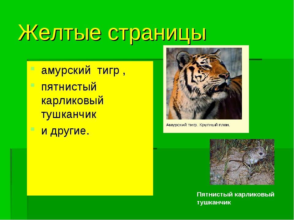 Желтые страницы амурский тигр , пятнистый карликовый тушканчик и другие. Пятн...