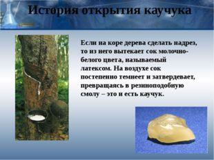 История открытия каучука Если на коре дерева сделать надрез, то из него вытек