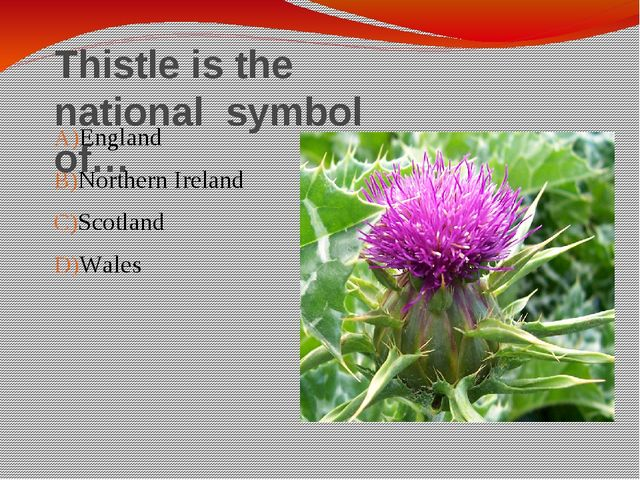 Thistle is the national symbol of… England Northern Ireland Scotland Wales