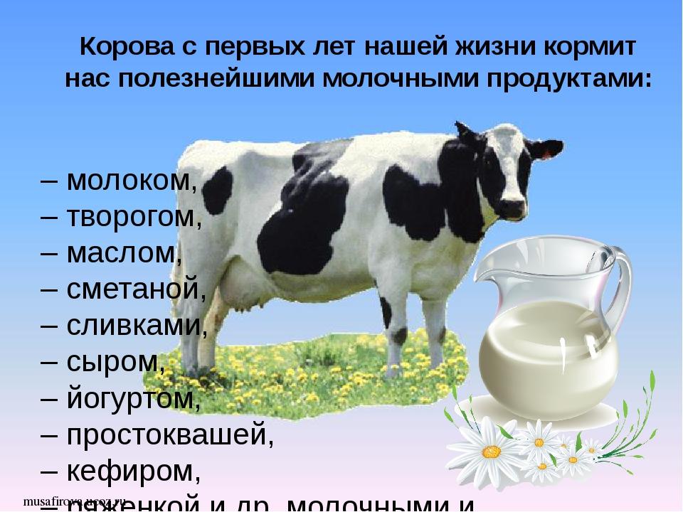 musafirova.ucoz.ru Корова с первых лет нашей жизни кормит нас полезнейшими м...