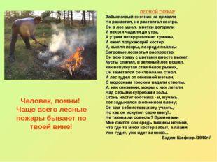 Человек, помни! Чаще всего лесные пожары бывают по твоей вине! ЛЕСНОЙ ПОЖАР З