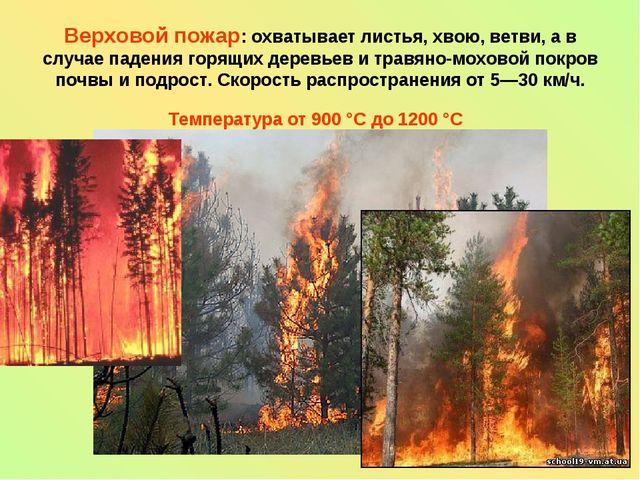 Верховой пожар: охватывает листья, хвою, ветви, а в случае падения горящих де...