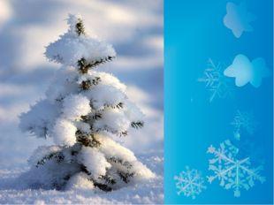 Как вы думаете, почему мы ёлочки остаёмся зимой одни зелёными? Кто нас ёлочек